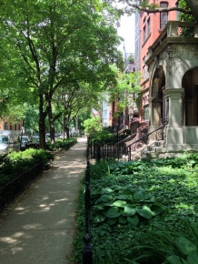 The leafy streets of Lincoln Park, Chicago