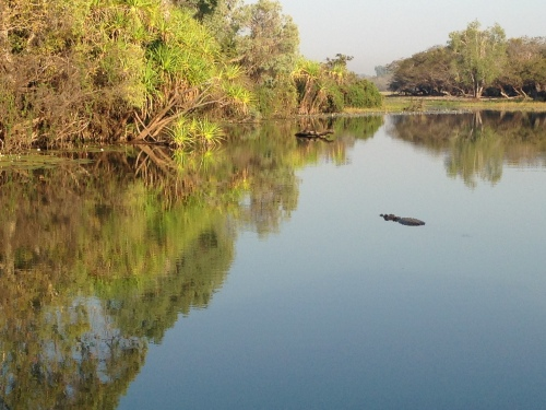 Alligator River - with a croc