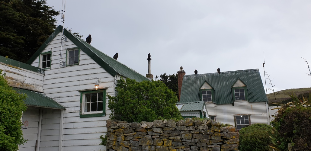 Turkey vultures on the roof